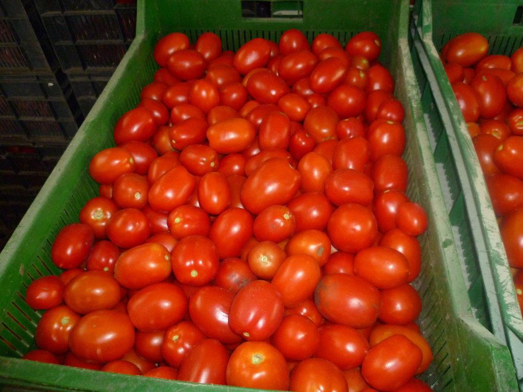 томат хайпил отзывы фото помощью